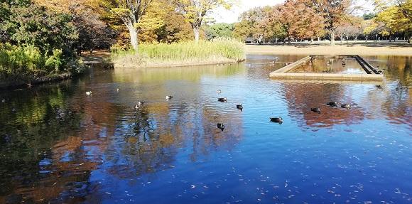 渡り鳥-代々木公園_580_287