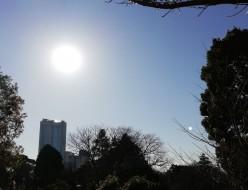 青山墓地-ヒルズと太陽