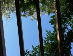 21-08夏の空とセミ-広尾