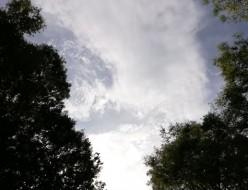 21-09初秋の空と緑-広尾
