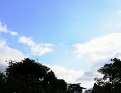 21-09秋の青空と緑-青山墓地